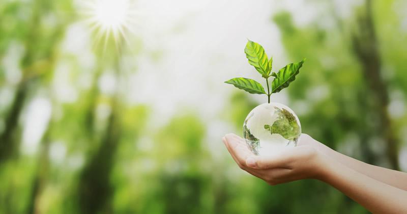 Milleproroghe: rinnovato il bonus verde per il 2020