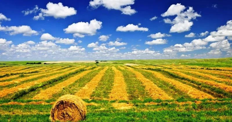 Banche dati del Catasto terreni: Pubblicati gli aggiornamenti 2019