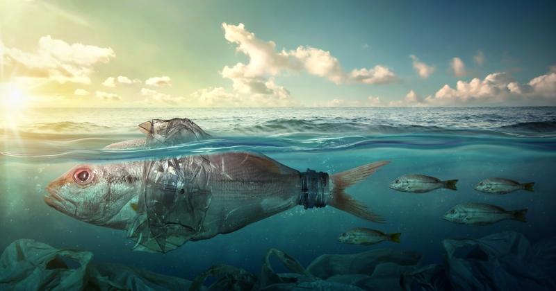 Mare, Corte Conti: Bene interventi di tutela, ma riduzione risorse non coerente