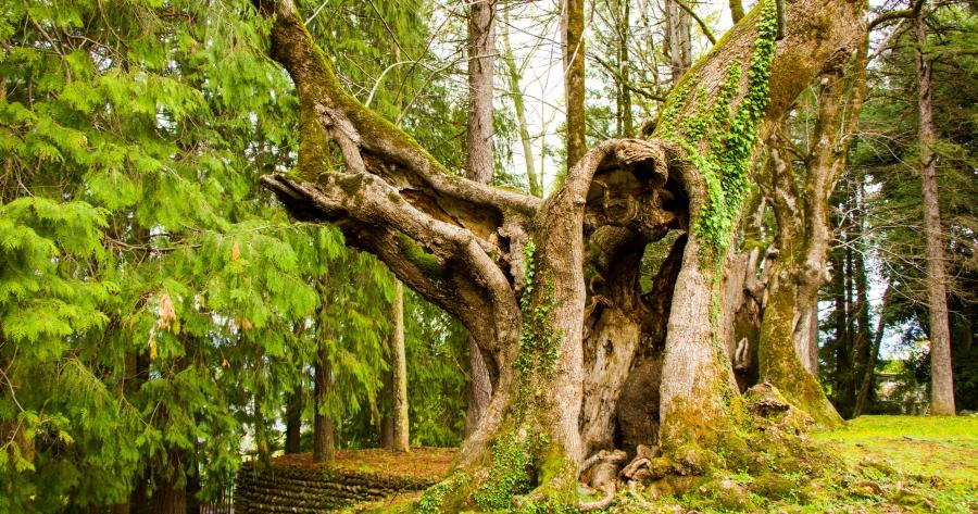 Elenco degli alberi monumentali d'Italia