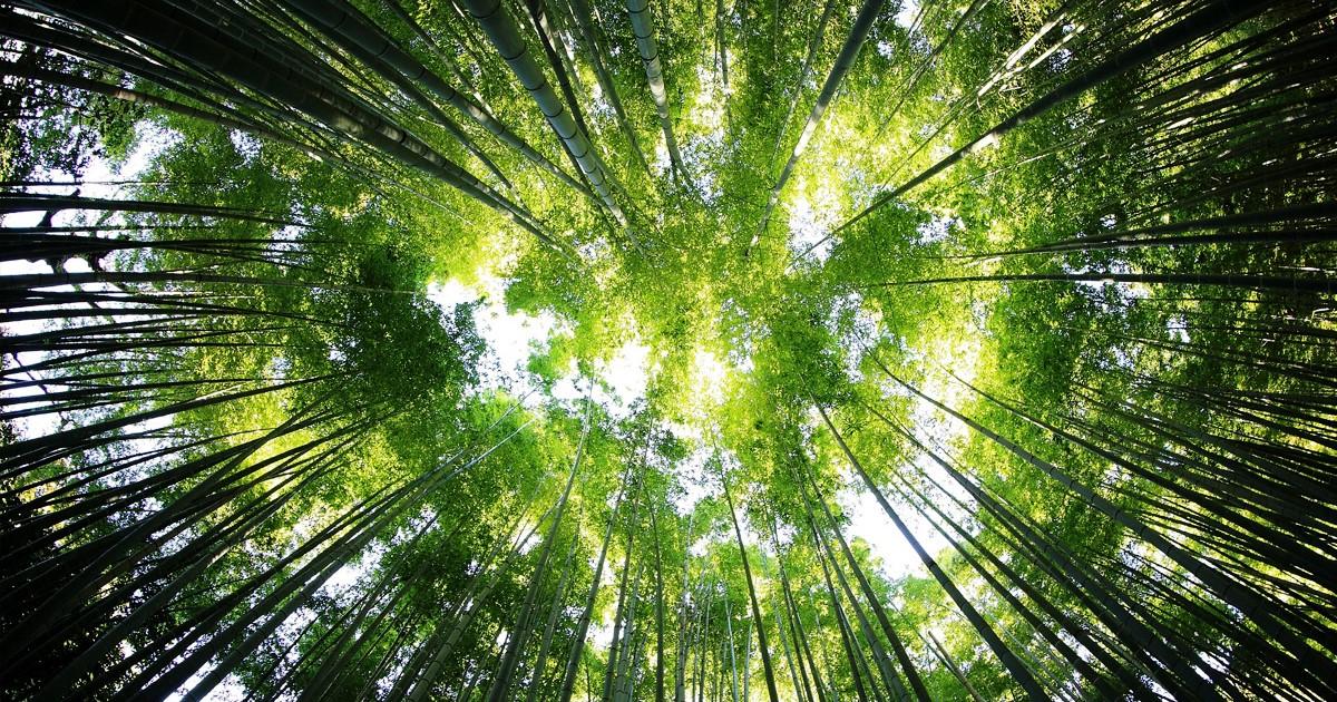 Ministero Ambiente: Consultazione su Piano di adattamento ai cambiamenti climatici