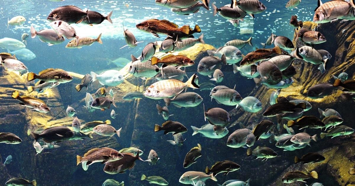Codice dei contratti: Tutti muti come i pesci