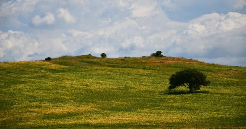 Cantieri verdi e Lavoras, dalla Giunta sarda 4,8 milioni nel settore della forestazione