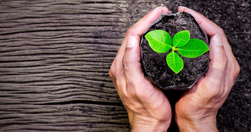 Criteri ambientali minimi e codice dei contratti: Audizione di Cantone alla Commissione Ecomafie