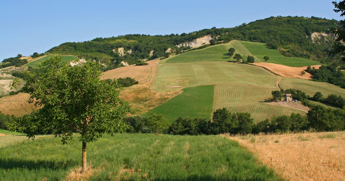 Emilia Romagna: dal Psr 2014-2020 oltre 12 milioni di euro per i primi cinque bandi Goi (Gruppi operativi per l'innovazione)