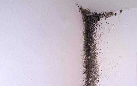 Ponti termici formazione muffe senza condensazione