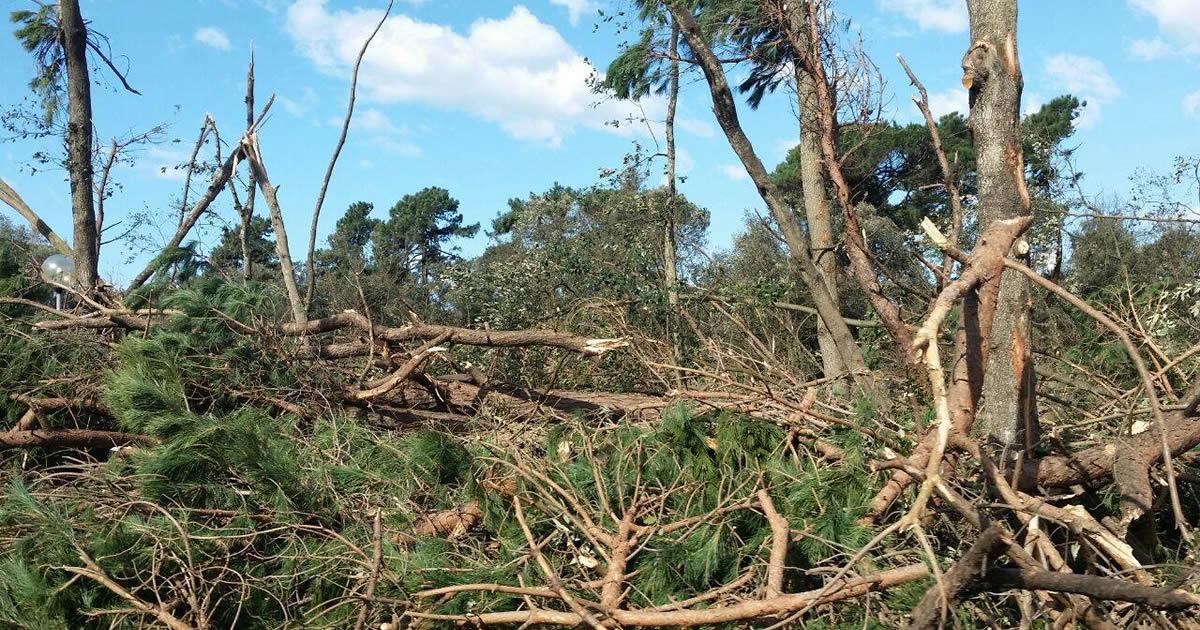 Tempesta di vento, bando da 15 milioni per le foreste