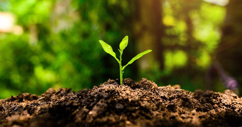 Valutazione d'impatto ambientale (VIA): dalle Marche una nuova proposta di legge